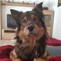 Profilbild von Tanja M.